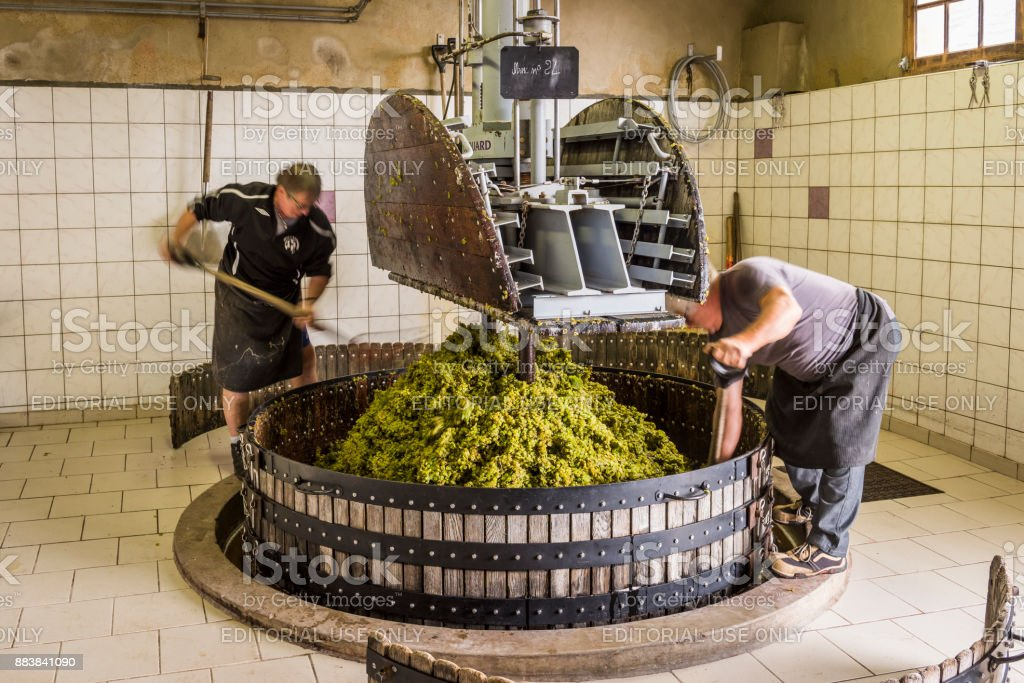 Pressing Grapes in Hautvillers Champagne stock photo