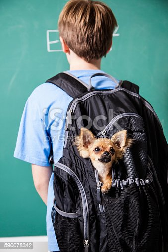 istock Pre-teenage student brings his pet dog back to school. 590078342