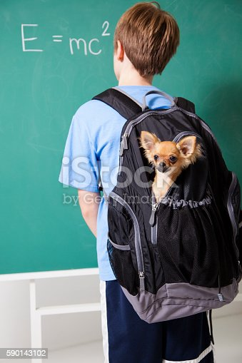 istock Pre-teenage student brings his pet dog back to school. 590143102