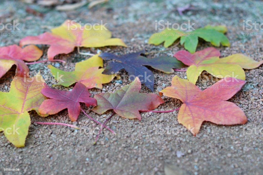 Pretty autumn leaves stock photo