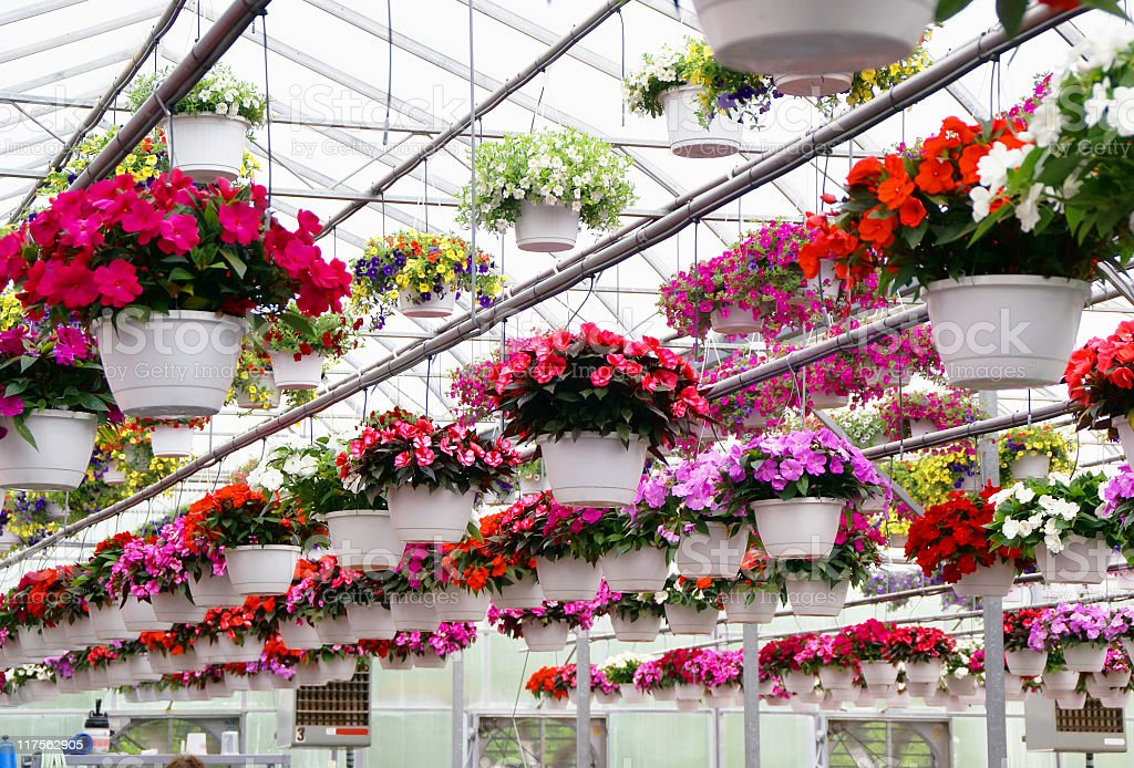Pretty Baskets in Greenhouse royalty-free stock photo