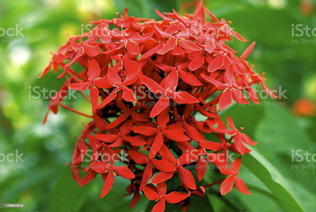 Pretty bouquet of red tropical flowers stock photo istock pretty bouquet of red tropical flowers royalty free stock photo mightylinksfo