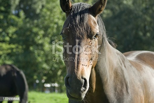 Pretty brown horse on a paddock