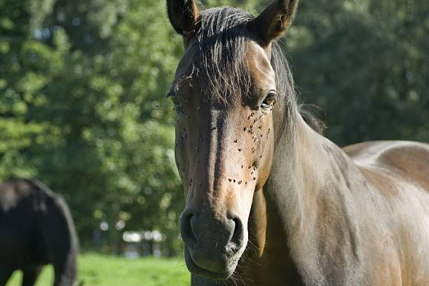 Pretty brown horse Pretty brown horse on a paddock bristle animal part stock pictures, royalty-free photos & images