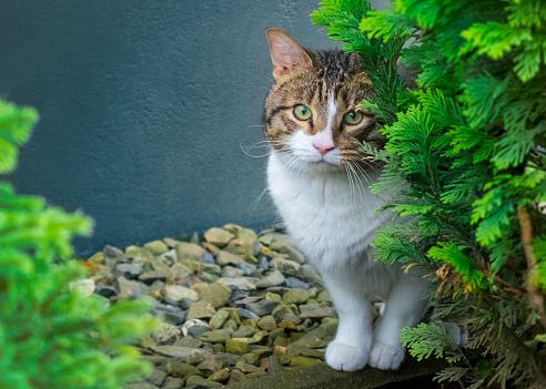 Pretty cat hiding in the bushes