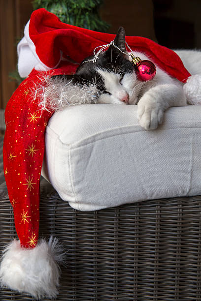 Pretty cat resting within christmas decor picture id520294995?b=1&k=6&m=520294995&s=612x612&w=0&h=pcg80gkudsafwit8dvxjztjbnd3bmm cvxt 3rt31zq=