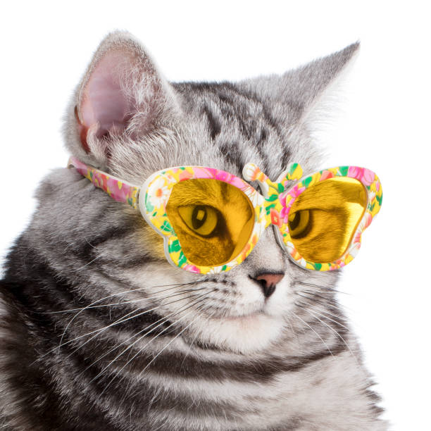 Pretty cat with sunglasses on a white background picture id1130446053?b=1&k=6&m=1130446053&s=612x612&w=0&h=topfb9vpkrftwn6u4mi3bannuxshz1tjdnpjmhfafds=