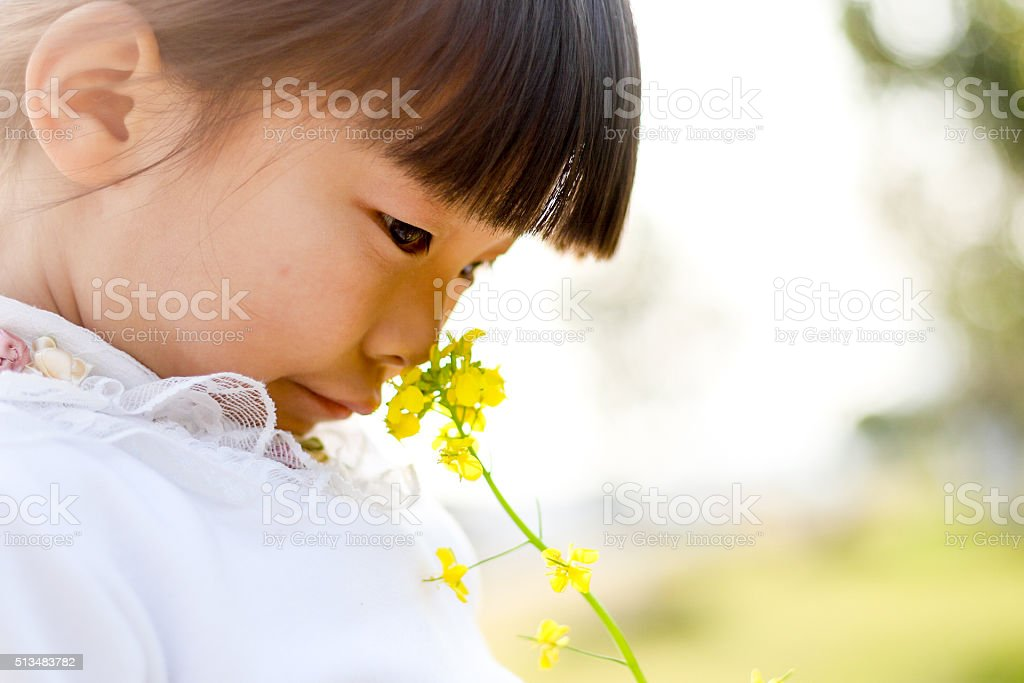 Pretty Chinese Girl In Rape Flowers Royalty Free Stock Photo