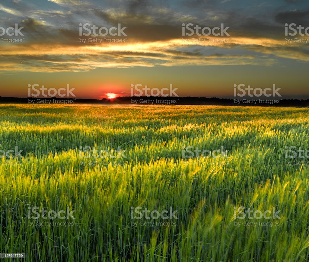 A pretty field during a sunset royalty-free stock photo
