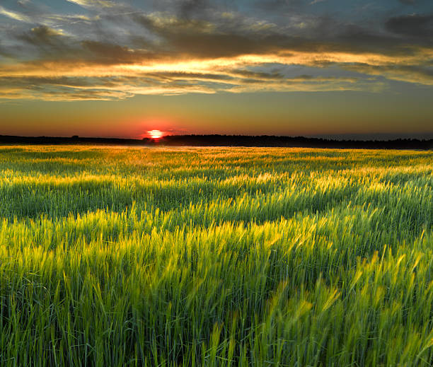 A pretty field during a sunset stock photo
