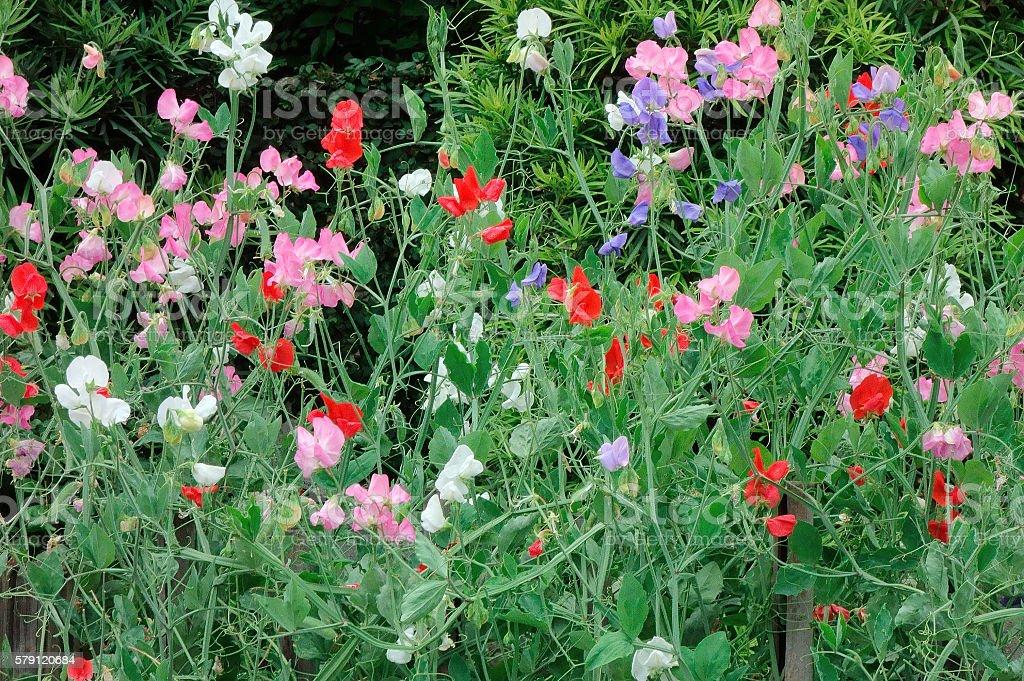 Pretty flower stock photo