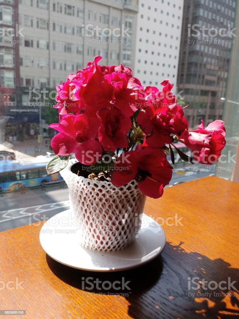 Einen schönen Blumentopf auf einem Tisch in einem Hochhaus café - Lizenzfrei Behälter Stock-Foto