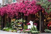 Pretty Flower shop