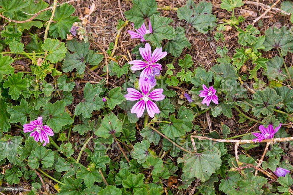 Pretty flowers purple royalty-free stock photo