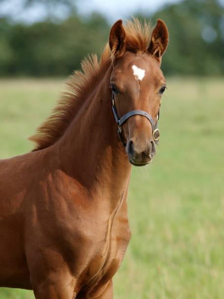 Pretty foal picture id1150438499?b=1&k=6&m=1150438499&s=612x612&w=0&h=g lyjrokx66glow33daq 2bitklwmtguq vwxhs9dl0=
