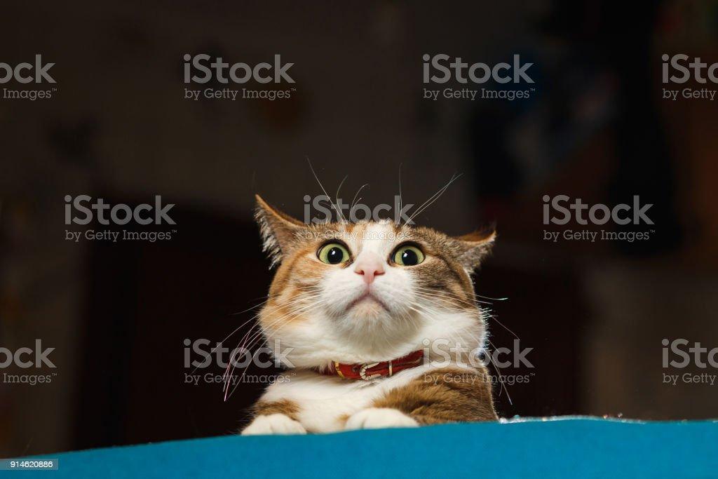 Gato bastante jengibre pinchó hasta oídos en alerta - foto de stock