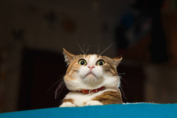 pretty ginger cat pricked up ears in the alert - astonishment stock photos and pictures