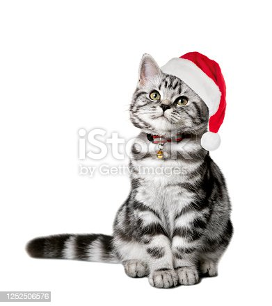 Pretty kitten in a santa hat isolated on white