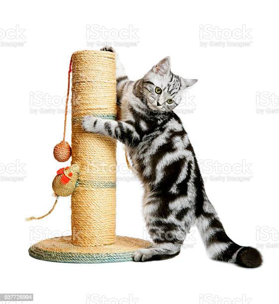Pretty kitten on a scratching post picture id537726994?b=1&k=6&m=537726994&s=612x612&h=s6w7gxtd6 vivep0to3qit3kdqq fzicjcskbwyhewy=