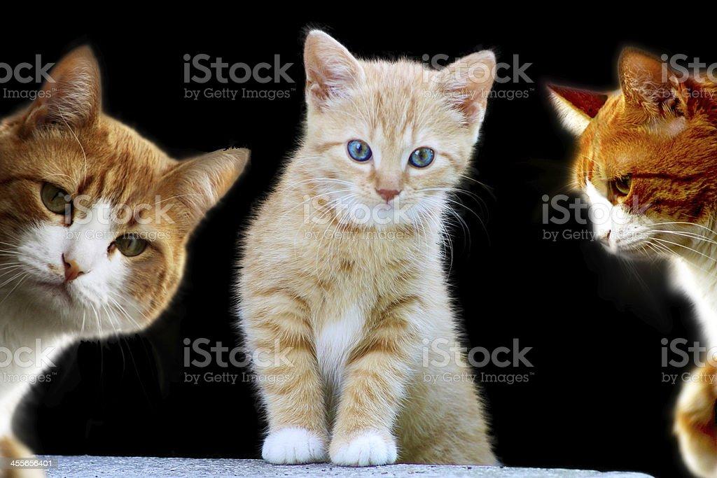 Pretty Kittens royalty-free stock photo