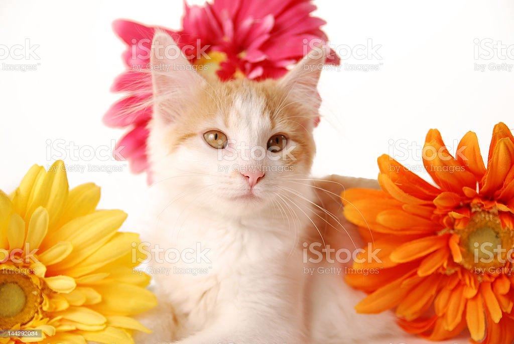 Pretty kitty royalty-free stock photo
