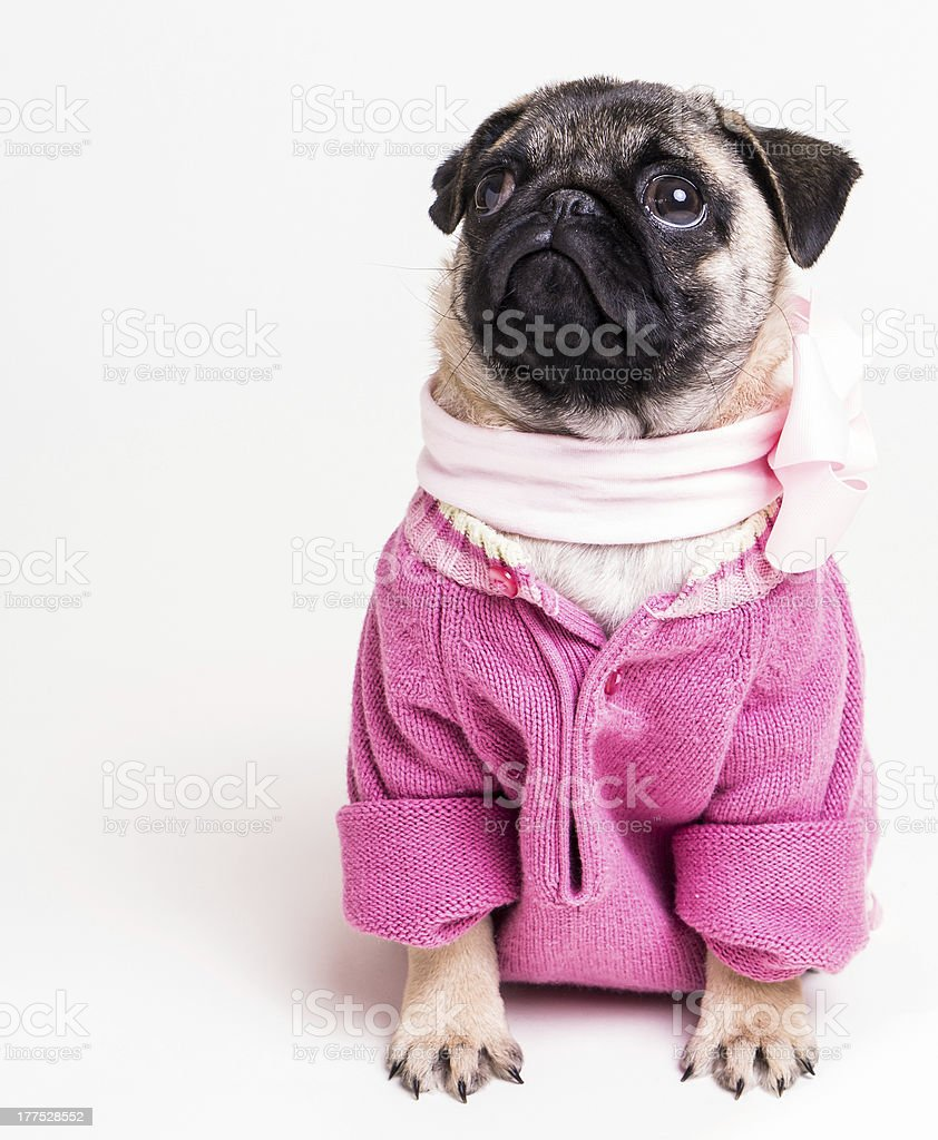 Pretty Lady in Pink royalty-free stock photo