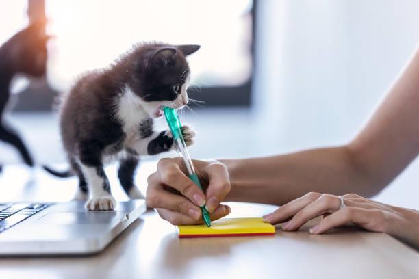 Eine hübsche kleine Katze beißt die Spitze eines Stiftes, während ihr Besitzer eine Notiz mit ihm schreibt. – Foto