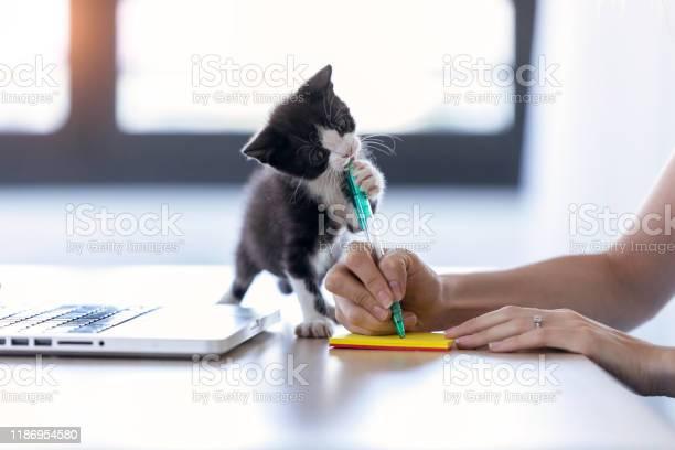 Pretty little cat biting the tip of a pen while its owner writes a picture id1186954580?b=1&k=6&m=1186954580&s=612x612&h=d1ow2y66ewwr dxiq1i3 9aq3twwjip2wkuenktdmxs=