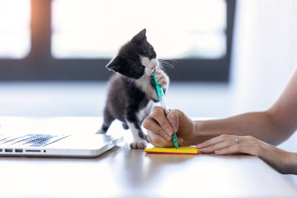 Pretty little cat biting the tip of a pen while its owner writes a picture id1186954580?b=1&k=6&m=1186954580&s=612x612&w=0&h=wk12k6cbky wzrn4n enmjk jcpxbdklzlxbe7czlvq=