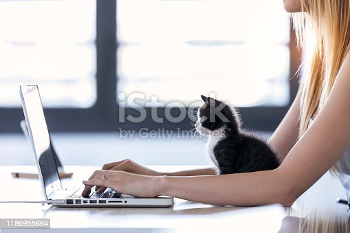 istock Pretty little cat looking the laptop while its owner working with him at home. 1186955664