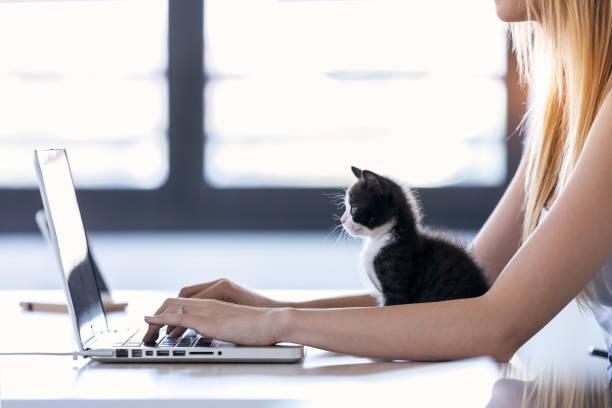 Hübsche kleine Katze, die den Laptop schaut, während ihr Besitzer mit ihm zu Hause arbeitet. – Foto