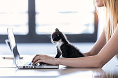Shot of a pretty little cat looking the laptop while its owner working with him at home.