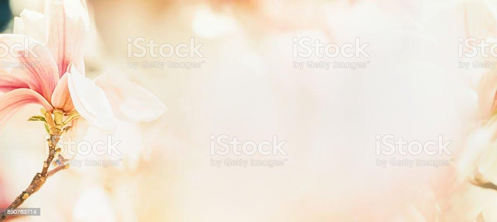 Pretty magnolia blossom in pastel color, floral banner, springtime...
