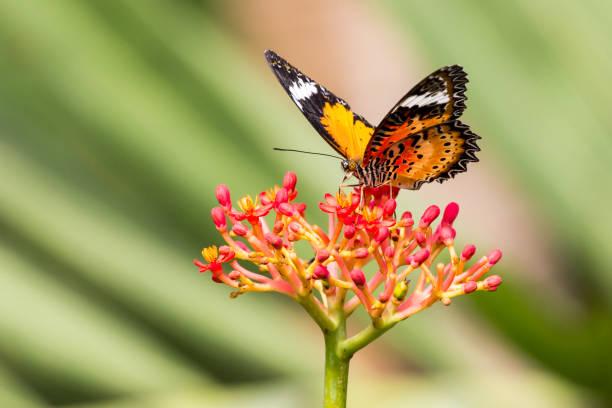 Ziemlich bunte Schmetterlinge auf Nahrungssuche auf einer Blume – Foto
