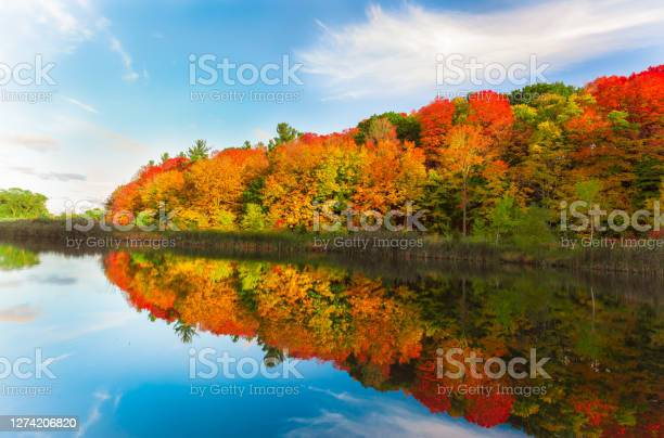 Photo of pretty natural, colorful autumn season. forest in the lake, landscape background,sunset time
