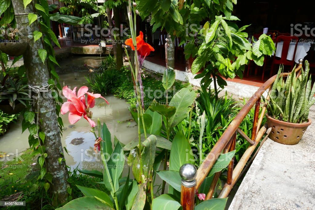 Pretty Orange Flowers On The Mekong Delta Grey Water In The