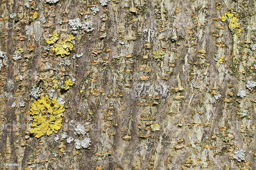 Background display of pretty lichen on tree bark stock photo