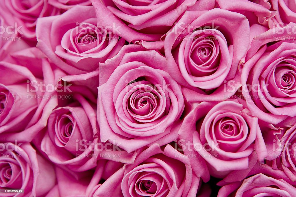 Pretty pink royalty-free stock photo