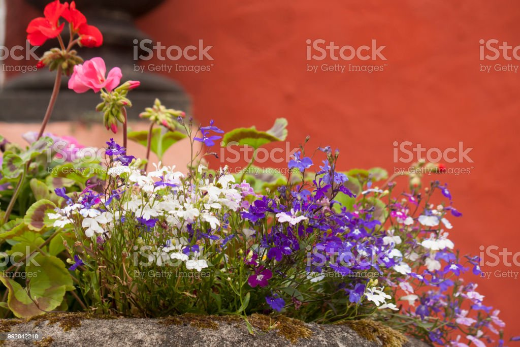 Pretty pots filled with summer flowers stock photo