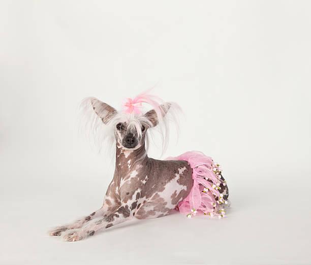 hübsche punk haar ballerina - prinzessinnen tutu stock-fotos und bilder