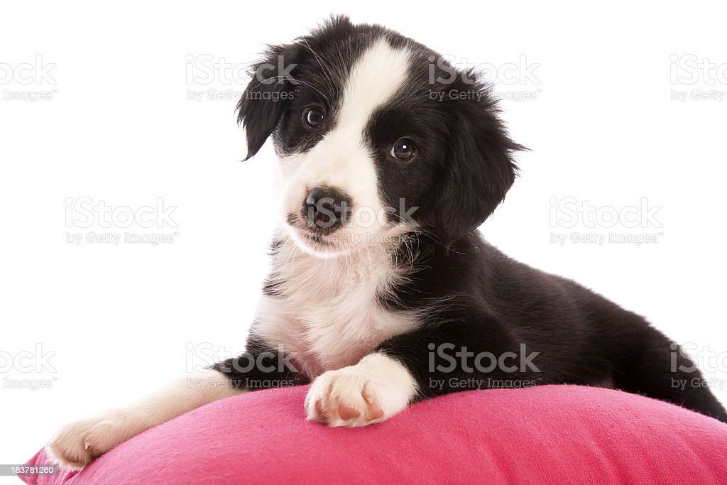 Pretty Puppy stock photo