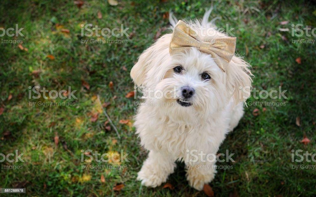 Pretty Puppy stock photo
