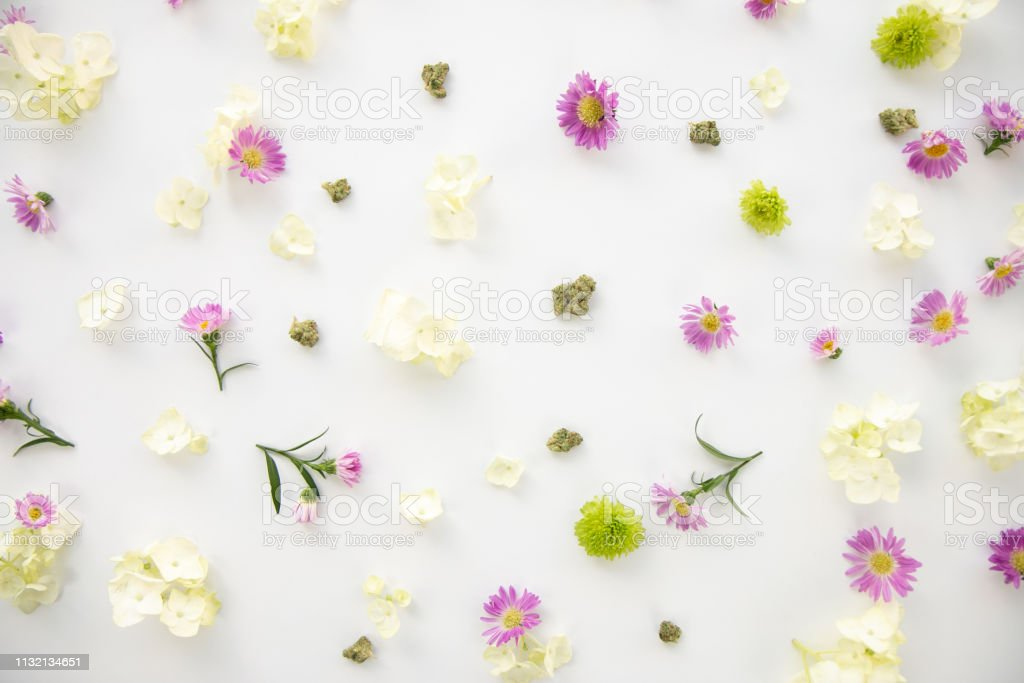 Pretty Purple Daisy and Bright Green Spring Flowers Floral Cannabis Background Wallpaper with Marijuana Nugs or Buds - Top Down stock photo