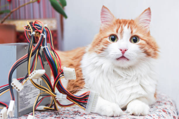 Pretty red cat and computer wires picture id905473976?b=1&k=6&m=905473976&s=612x612&w=0&h=8n45l0ybqhsdcaijrgxqthbxbtzhy12ijirh6pwyxg4=