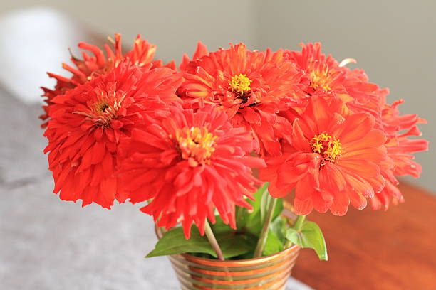 Pretty Red Flowers in a Vase stock photo