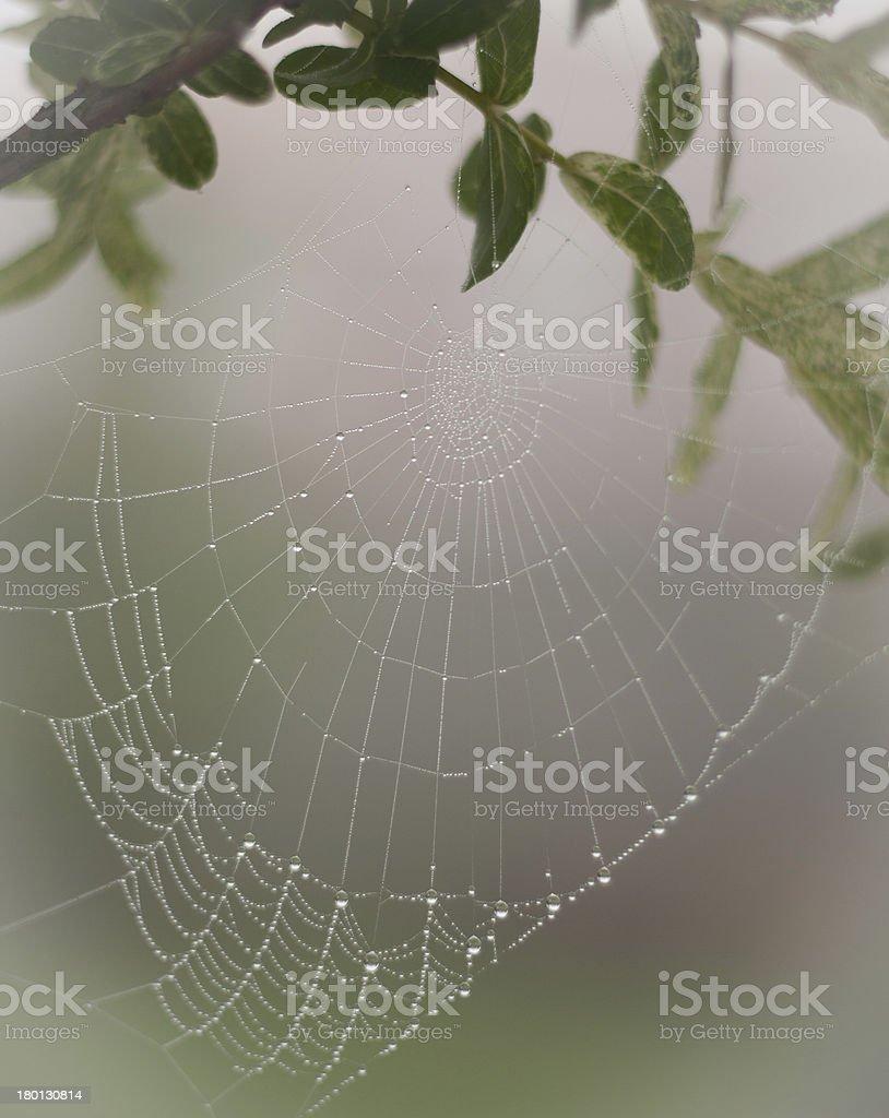 drop halloween rain raindrop spray pretty scary frightening spider web