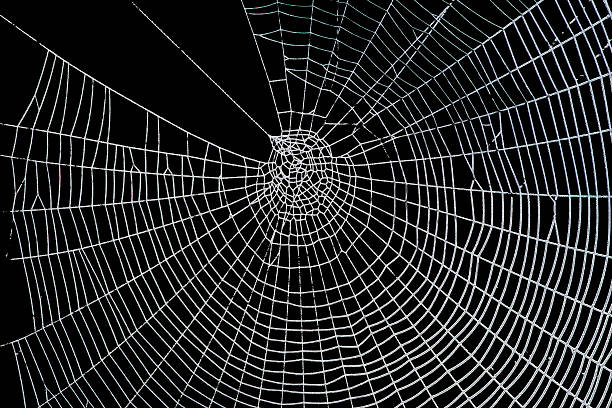 Pretty scary frightening spider web stock photo