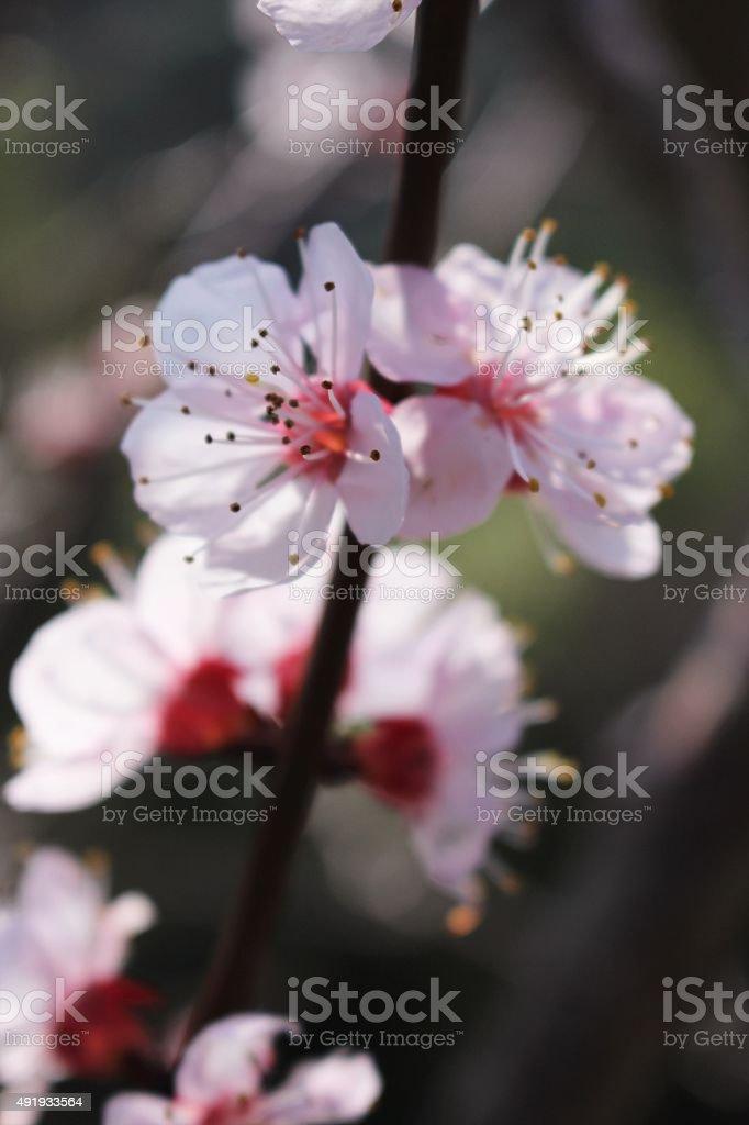 Pretty spring blossom close up stock photo