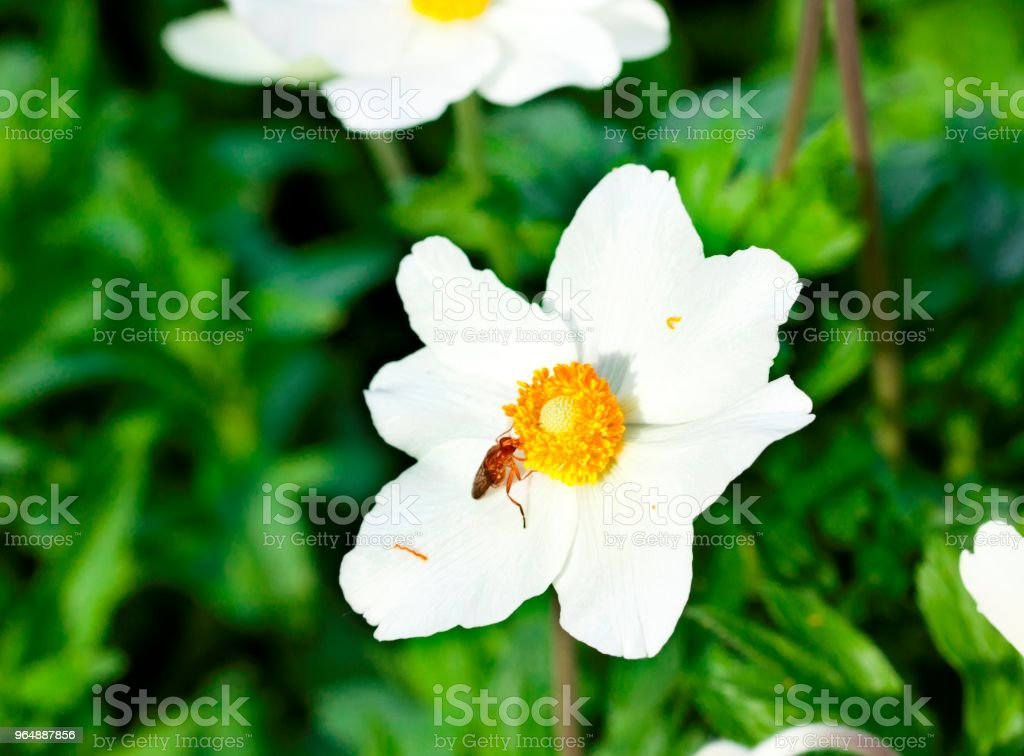 Pretty white flowers blooming in a garden. royalty-free stock photo