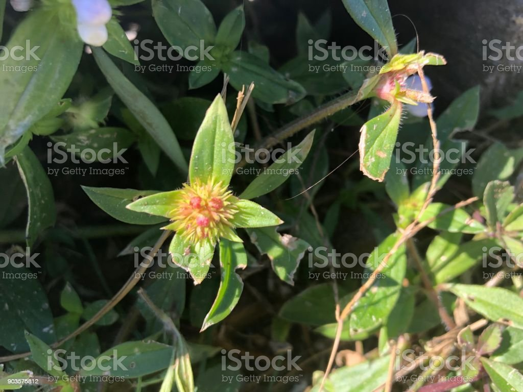 pretty wildflower close-up stock photo
